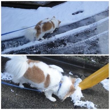 ちわ雪.jpg