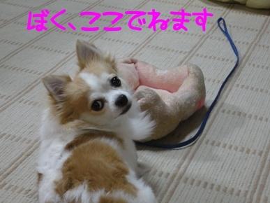ちわvSSXf.jpg